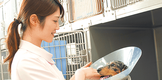 動物看護師ってどんな仕事?