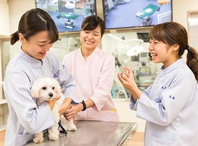 動物看護実習