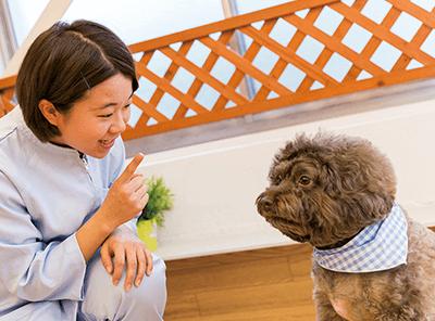 犬の保育園演習