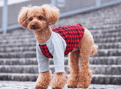 犬の服作り実習