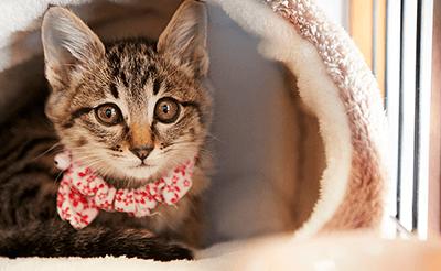 猫看護スペシャリスト