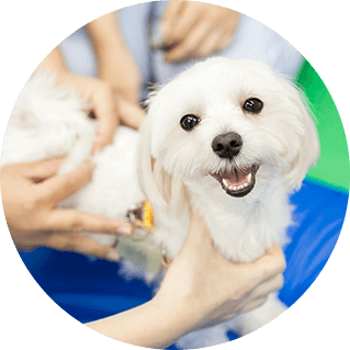 実践的な動物福祉学習
