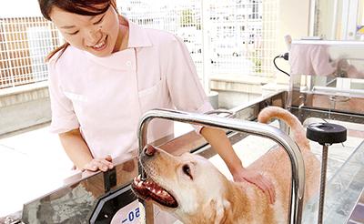犬の体を洗い流す生徒