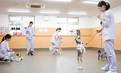 ドッグトレーニング室