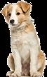グルーミング実習のモデル犬