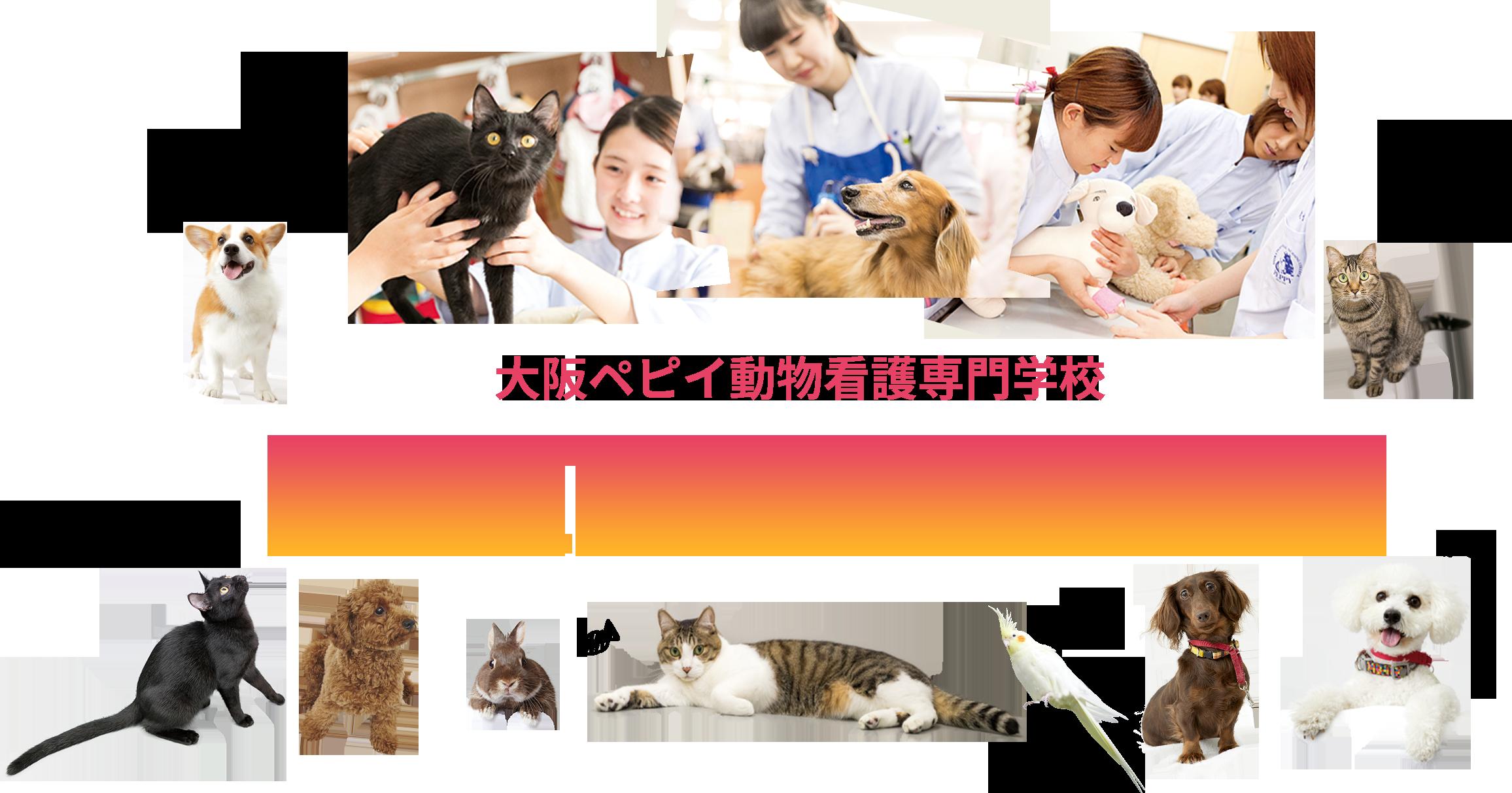 大阪ペピイ動物看護専門学校 OPEN CAMPUS