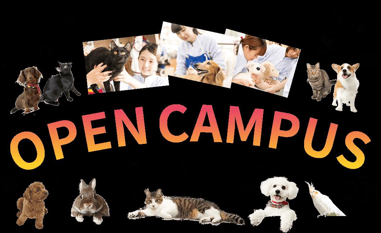OpenCampus 大阪ペピイ動物看護専門学校