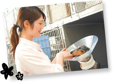 動物看護師の仕事を知ろう!