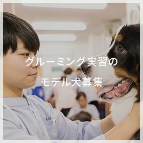グルーミング実習のモデル犬募集