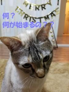 ブログ用27
