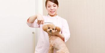 吉岡 杏奈さんの写真
