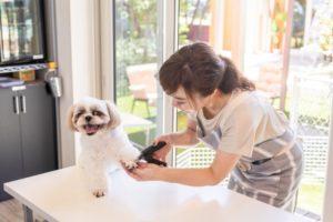 【トリマー監修】自宅でできる犬の爪切り4ステップ