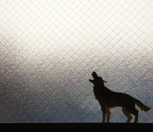 犬・猫の歴史と性質・性格について