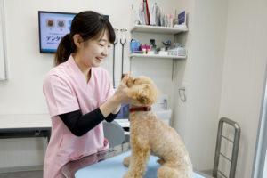 認定動物看護師合格率と就職率について